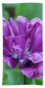 Very Pretty Purple Tulip With Dew Drops On The Petals Bath Towel