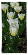 Very Pretty Spring Garden With Flowering White Tulips Bath Towel