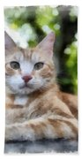 Volterra Italy Cat Watercolor Bath Towel