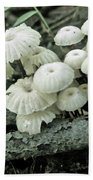 Wagon Wheel Mushroom Colony Bath Towel