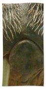 Walrus Whiskers Bath Towel