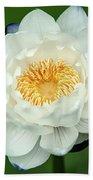 Water Lily In Bloom Bath Towel
