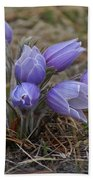 Watercolor Pasque Flowers Bath Towel