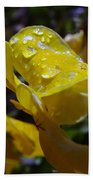 Waterdrops On A Pansy Bath Towel