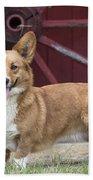 Welsh Pembroke Corgi Dog Outdoors Hand Towel