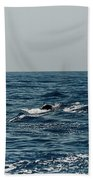 Whale Watching And Dolphins 3 Bath Towel