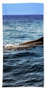 Whale Watching Balenottera Comune 4 Hand Towel