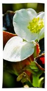 White Begonia At Pilgrim Place In Claremont-california  Bath Towel