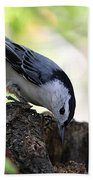 White-breasted Nuthatch Bath Towel