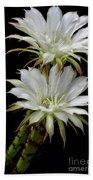 White Cactus Flowers Bath Towel