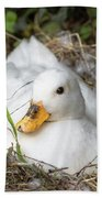 White Call Duck Sitting On Eggs In Her Nest Bath Towel
