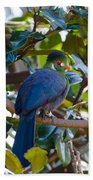 White-cheeked Turaco Bath Towel