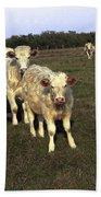 White Cows Bath Towel