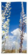 White Flowering Sea Squill On A Blue Sky Bath Towel