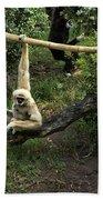 White Handed Gibbon 2 Bath Towel