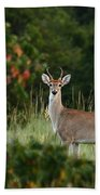 White-tail Buck Through The Trees Bath Towel