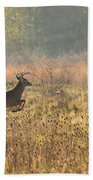 White Tail Morning Bath Towel