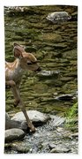 White-tailed Fawn At Vichy Springs Resort In Ukiah Hand Towel