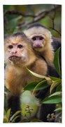 White-throated Capuchin Monkeys Cebus Bath Towel