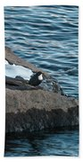 White-throated Dipper Nr 4 Bath Towel