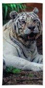 White Tiger Gladys Porter Zoo Texas Bath Towel