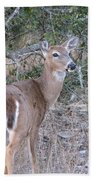 Whitetail Deer II Bath Towel