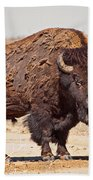 Wild Bison Bath Towel