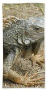 Wild Colorful Iguanas In The Outdoors With Spines On His Back Bath Towel