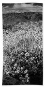 Wild Desert Flowers Blooming In Black And White In The Anza-borrego Desert State Park Bath Towel