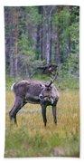 Wild Finnish Forest Reindeer 24 Bath Towel