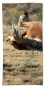 Wild Horse With And Itch Hand Towel by Frank Madia