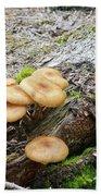 Wild Mushrooms 2 Bath Towel