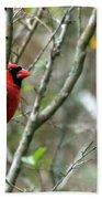 Winter Cardinal Sits On Tree Branch Bath Towel