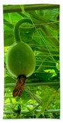 Winter Melon In Garden 3 Bath Towel