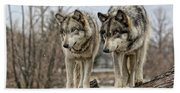 Wolf Pair Bath Towel
