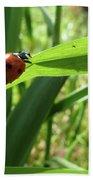 World Of Ladybug 2 Hand Towel