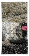 Yawning Harbor Seal - Oregon Coast Bath Towel