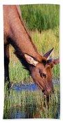 Yearling Elk Hand Towel