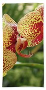 Yellow And Red Spotted Phalaenopsis Orchids Bath Towel