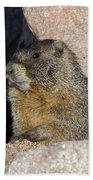Yellow-bellied Marmot Poses For Pictures Bath Towel