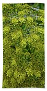 Yellow Blossoms Of Green Aeonium In Huntington Desert Garden In San Marino-california  Bath Towel