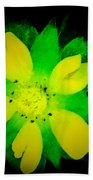 Yellow Buttercup On Black Background Bath Towel