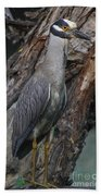 Yellow Crested Night Heron On Log Bath Towel