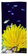 Yellow Feather Star Bath Towel