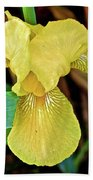 Yellow Iris At Pilgrim Place In Claremont-california Bath Towel