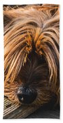 Yorkshire Terrier Biting Wood Bath Towel