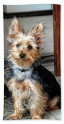 Yorkshire Terrier Dog Pose #6 Bath Towel