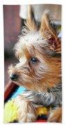 Yorkshire Terrier Dog Pose #8 Bath Towel