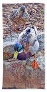 You Go First - Male And Female Mallard Ducks Bath Towel