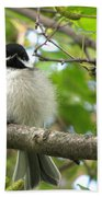 Young Black-capped Chickadee Bath Towel